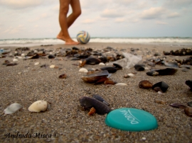 Seaside Landscape no 2